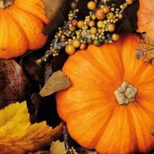 Duni Servietten Tissue Fall pumpkins 33 x 33 cm 20 Stück