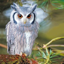 Duni Servietten Winter Owl 33 x 33 cm 20 St.