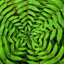 Duni Servietten Tissue Circle leaves 33 x 33 cm 20 Stück
