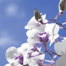 Paper+Design Servietten Tissue Sky Orchid 33 x 33 cm 20er