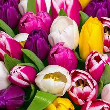 Paper+Design Servietten Tissue Tulips in colour 33 x 33 cm 20 Stück